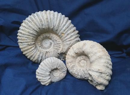 d81ce16e7a96 Fossils