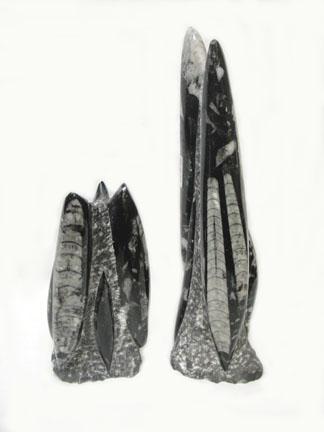 8e2a9d156717 Orthoceras Sculptures